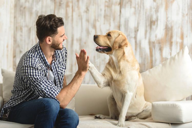 Masz psa i wprowadzasz się do nowego M? 4 porady